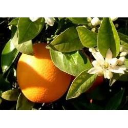 Caja de 15 kgs. de naranjas ecológicas de mesa